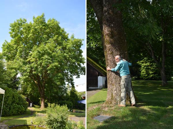 Johannes Holey und sein Baum